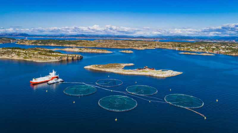 Aquaculture-news-side