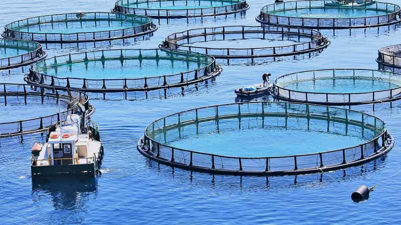 news-side-Aquaculture